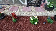 Red day lilies, white shasta daisies, and blue been flower.