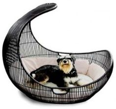 modern - pet accessories - A+R