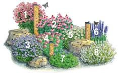 Planting plan for an insect friendly bed