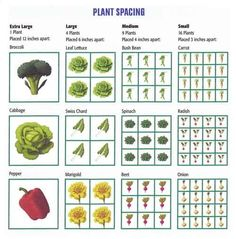 Square Foot Gardening Plant Spacing So previously we talked about Square Foot Gardening. I was telling you all to plant as many seeds as you can perf squar Garden Spaces, Garden Plants, Herb Garden, Garden Beds, Organic Gardening, Gardening Tips, Vegetable Gardening, Square Foot Gardening, Plantar