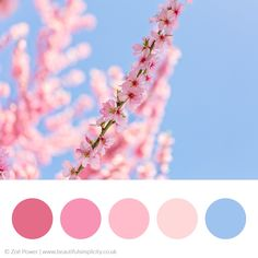 Aqua Color Palette, Color Schemes Colour Palettes, Spring Color Palette, Spring Colors, Color Combos, Peony Colors, Theme Color, Color Inspiration, Trends