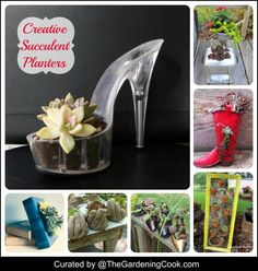 Great round up of creative succulent planters. Think outside the box!
