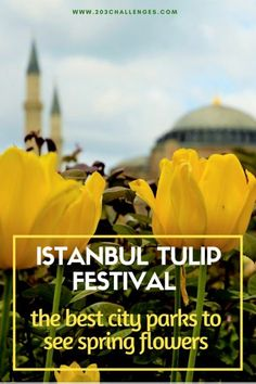 The challenge: explore Istanbul, tulip by tulipEvery year in April, Istanbul turns into the capital of tulips. This is when millions of bulbs show up in the parks and gardens of the city and transform old Constantinople i Dubai, Istanbul Travel, Travel Advice, Travel Articles, Travel Stuff, Travel Ideas, Travel Tips, Tulip Festival, Garden Bulbs