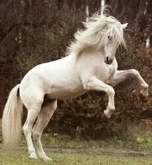 Google Image Result for http://www.colettebaronreid.com/blog/wp-content/uploads/Susan-Boyle-YouTube-Spirit-Wild-Horses-Stallion-Americas-Got-Talent2.jpg