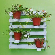 Good Morning 😊 ___ #goodmorningpost #goodmorning #like4like #flowers #flower #green #minigarden #garden #taman #filosofitanaman