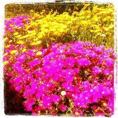 Pollen fills the air! Australian Wildflowers, Australian Flowers, Australian Garden, Australia Travel, Western Australia, Meadow Garden, Native Australians, Flower Landscape, Felder