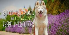 For many pet parents, warm weather is a welcomed treat. We get to spend more time outdoors with our four-legged companions, enjoying the sunshine and participating in fun outside activities. That is, until...