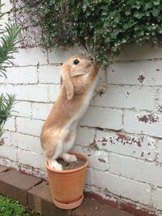 """Rabbit: """"Oh! The perfect height for me to reach!"""""""