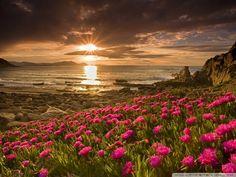 flori pe plaja