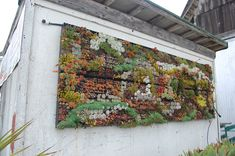 Succulent Wall via Far Out Flora Succulent Frame, Vertical Succulent Gardens, Succulent Wall Art, Hanging Succulents, Succulent Gardening, Succulents In Containers, Cacti And Succulents, Container Gardening, Growing Succulents
