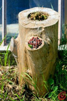 Recuperare un vecchio tronco e trasformarlo in una fioriera! #giardinaggio #lowcost