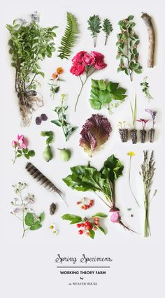 Spring Specimens // Working Theory Farm by The Weaver House