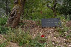 The tree planted in honor of the Righteous Among the Nations Adrianus van Eerd (1901 - 1990). Yad Vashem, spring 2015.