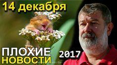 Вячеслав Мальцев | Плохие новости | Артподготовка | 14 декабря 2017