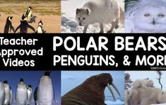 Arctic Animal Videos