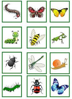 Montessori Materials, Teaching Materials, Daycare Crafts, Toddler Crafts, Nature Letters, Pictures Of Insects, Insect Crafts, Bugs And Insects, Preschool Math