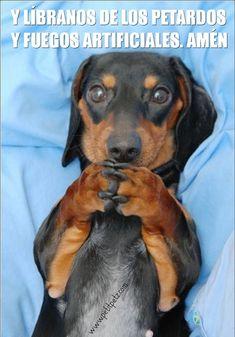No uses pirotecnia. Causa traumas y terror en nuestras mascotas. Si lo quieres regalale tranquilidad y amor