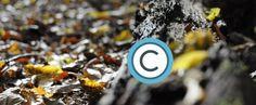 Urheberrechtsverletzung Google Websuche – Entfernung von urheberrechtlich geschützten Inhalten