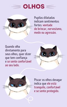 Cat Training cat infographic collection - Are you more interested in having a cat as pet just like most of people in the world? If yes, then this cat infographic collection will be pretty handy for you. Cat Hacks, Cat Info, Cat Whisperer, Kitten Care, Photo Chat, Cat Care Tips, Cat Behavior, Beautiful Cats, Cat Love