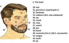 Visual Dictionary: The Head