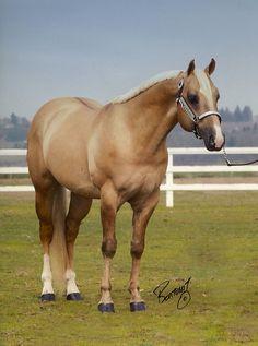 "Palomino Dun or ""Dunalino."" Both dun and cream on a red base. Palomino (Red ee + 1 cream C/Ccr) + dun (D) -Nix Alba Palomino, Andalusian Horse, Friesian Horse, Arabian Horses, Breyer Horses, All The Pretty Horses, Beautiful Horses, Beautiful Gorgeous, American Quarter Horse"