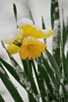 Hope....hang in there!  Spring is on it's way!   When the season & weather get mixed up