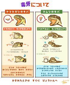 埋め込み Animal Facts, Animal 2, Graphic Design Illustration, Illustration Art, Animals And Pets, Funny Animals, Animals Information, Art Assignments, Primitive Technology