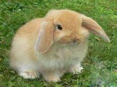 Grognards: «Conigli come i cani e i gatti»Petizione per gli a...