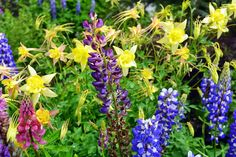 Mille Fiori Favoriti: Wildflowers Along the Way
