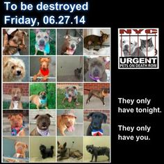TO BE DESTROYED - 06/26/14 PITTIES ARE IN DANGER AGAIN. THERE ARE FAR TOO MANY TODAY!!! ALL THESE DOGS COUNT ON US!!! LET'S NOT LET THEM DOWN!!! PLEASE OPEN YOUR HEARTS AND PLEDGE, TAKE THEM HOME, BUT BE QUICK AS TIME IS TICKING AWAY. PLEASE BE QUICK WHEN MAKING UP YOUR MIND!!! https://www.facebook.com/media/set/?set=a.611290788883804.1073741851.152876678058553type=3