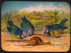 Birds Blue Tits watching snail Lantern Slide c1900 Hand coloured