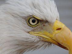 """Eu tirei:""""Uau! De fato você tem verdadeiros olhos de águia e conseguiu se dar muito bem!"""" (11 de ..."""