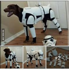My dog needs this! For reasons of course
