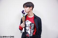 Bae Jinyoung   Wanna One