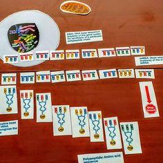 DNA protein translation manipulative 2