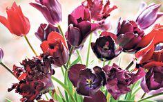 tulip jan Reus - and friends