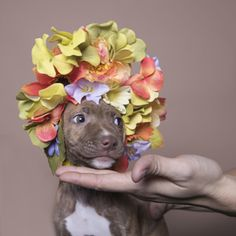 Sweet little pit as seen on Sophie Gamand's flower power project