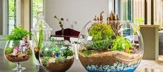 Ideas to Decor Your Home with Terrariums