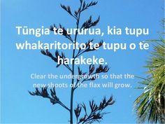 Tūngia te ururua, kia tupu whakaritorito te tupu o te harakeke. Clear the undergrowth so that the new shoots of the flax w. New Zealand Houses, Air New Zealand, Learning Spaces, Kids Learning, Favorite Words, Favorite Quotes, Maori Words, Dad In Heaven, Maori Art
