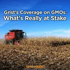 Grist's Coverage on GMOs: What's Really at Stake. Read Here: http://civileats.com/2014/01/14/grists-coverage-on-gmos-whats-really-at-stake/#sthash.OYkCNYwt.dpuf