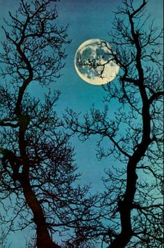 light blue sky and full moon with trees in foreground.