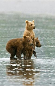 3 Little Bear Cubs How Cute!