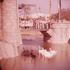 The Castle Entrance and Moat - Disneyland - 1955