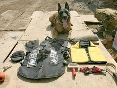 Photographic Print: A Military Police Dog Sits Beside His Issued Protective Gear by Stocktrek Images : Military Working Dogs, Military Dogs, Police Dogs, Military Police, Military Service, Flak Jacket, Brave, Parasols, Work With Animals