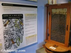 Bee hive at Cape Cod Natural Museum of History http://adaytrip.com/cape-cod-a-museum-conservation/attachment/bee-hive-at-cape-cod-natural-museum-of-history/