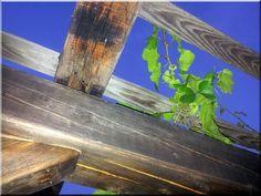 Pergola antik faanyagokból - Antik bútor, egyedi natúr fa és loft designbútor, kerti fa termékek, akácfa oszlop, akác rönk, deszka, palló, wabi sabi rusztikus lakások