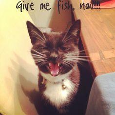 My cat❤️ #cat #funny