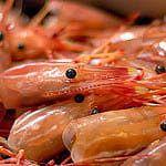 How to buy shrimp