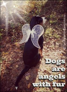 indeed, unconditional open-hearted loving, compassionate Angels...