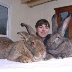 Giant rabbit. Fungallery.com